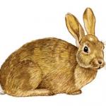 Ρυθμίσεις θήρας κυνηγετικής περιόδου 2014-2015