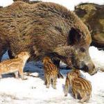 Το κυνήγι είναι για να ενώνει τα αταίριαστα στην ζωή...