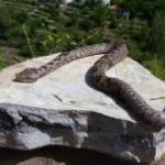 Ιστορίες για Φίδια